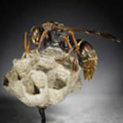 Wasp On A Nest Art Print