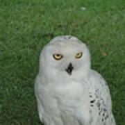 Watching Owl Art Print