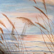 Watching The Sails Art Print