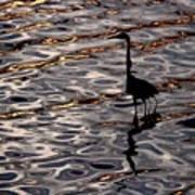 Water Bird Series 17 Art Print