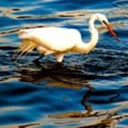 Water Bird Series 34 Art Print