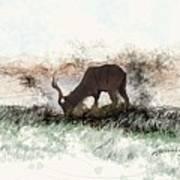 water buck in Addo Park S.A. Art Print