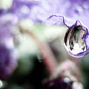 Water Drop On Purple Flower Art Print