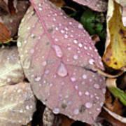 Water Drops 2 Art Print
