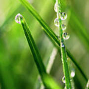 Water Drops On Spring Grass Art Print