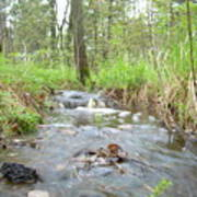 Water Flows After A May Rain Art Print