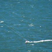 Water Glider Art Print