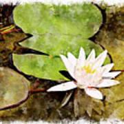 Water Hyacinth Two Wc Art Print