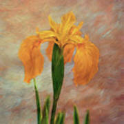 Water Iris - Textured Art Print