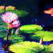 Water Lilies Art Print by Harry Spitz