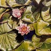 Water Lilies On The Ringdijk Art Print