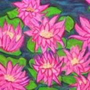 Water Lillies Art Print