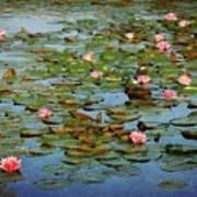 Water Lily Ballet Art Print