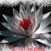 Water Lily Christmas Art Print