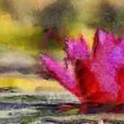 Water Lily - Id 16235-220419-3506 Art Print