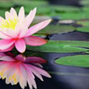 Water Lily In Lake Art Print