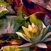 Water Lily In Living Color Art Print