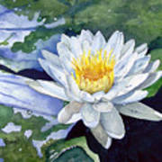 Water Lily Print by Sam Sidders