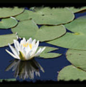 Water Lily With Black Border Art Print