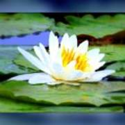 Water Lily With Blue Border - Digital Painting Art Print