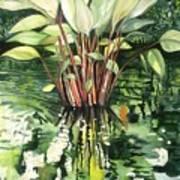 Water Plant Art Print