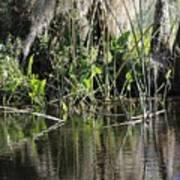 Water Reeds And Spanish Moss Art Print