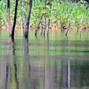 Water Reflections On Amazon River Art Print
