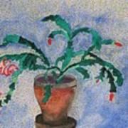 Watercolor Christmas Cactus First Bloom Art Print