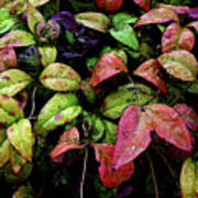 Watercolor Colorful Leaves After A Shower 1771 W_2 Art Print
