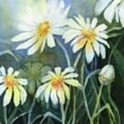 Daisies Flowers  Art Print