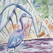 Watercolor - Little Blue Heron In Mangrove Forest Art Print