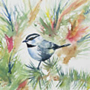 Watercolor - Mountain Chickadee And Pine Art Print