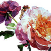 Watercolor Of Two Roses In Pink And Violet On One Stem That  I Dedicate To Jacques Brel Art Print