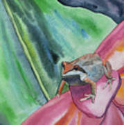 Watercolor - Small Tree Frog On A Colorful Flower Art Print
