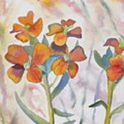 Watercolor - Wallflower Wildflowers Art Print