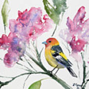 Watercolor - Western Tanager In A Flowering Tree Art Print