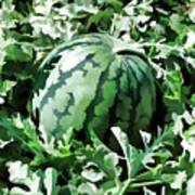 Waterelons In A Vegetable Garden Art Print