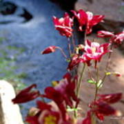 Waterfall And Columbine II - Pride Of Colorado Art Print