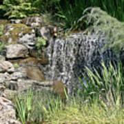 Waterfall And Pond Art Print