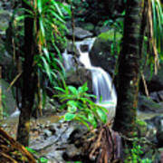 Waterfall El Yunque National Forest Mirror Image Art Print