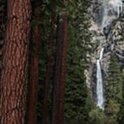 Waterfall Of Pines Art Print