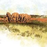 Waterhole - Addo National Park  Art Print