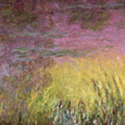 Waterlilies At Sunset Art Print