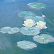 Waterlilies Evening Art Print
