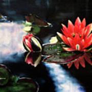 Waterlilly Art Print