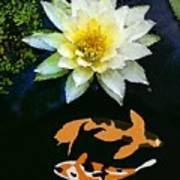 Waterlily And Koi Pond Art Print