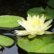 Waterlily In Yellow Art Print