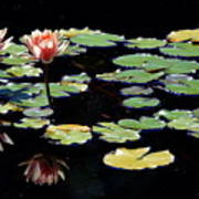 Waterlily Panorama Art Print