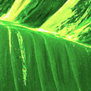 Waves Of Green Art Print