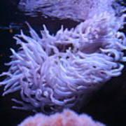 Waving Sea Anemone - Aquarium Art Print